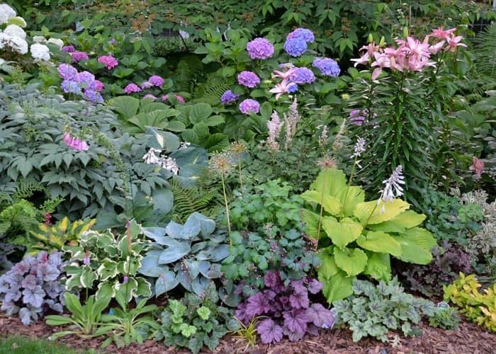 Susan Martins Zone 6 Garden