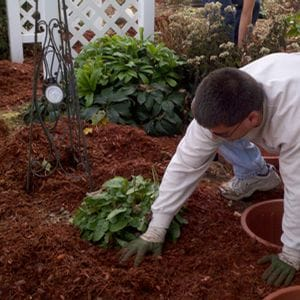 Now Is A Great Time To Mulch Your Plants
