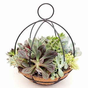 Succulent Ball Planter