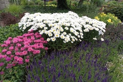 Perennial Garden Shot