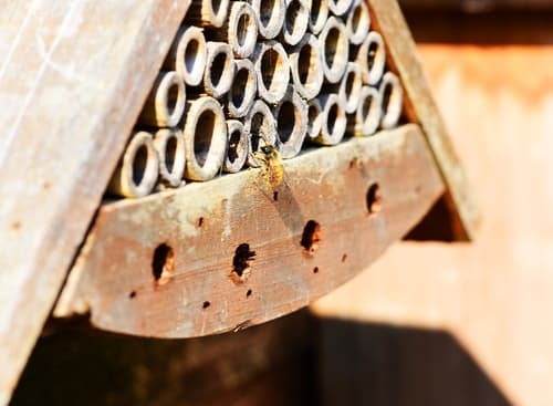 Mason Bee with House