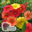 Annuals Combos