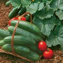 Vegetables Plants