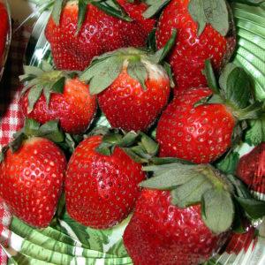 Fragaria Ozark Beauty Everbearing Strawberry