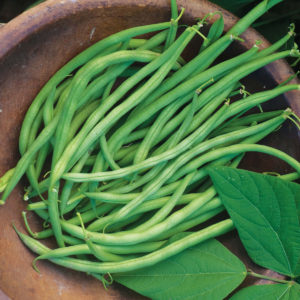 Bean Blue Lake Bush Bean