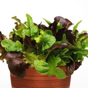 Lettuce City Garden Mix Lettuce