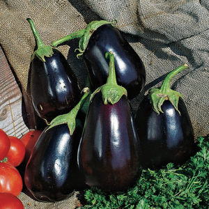 Eggplant Early Midnight Eggplant