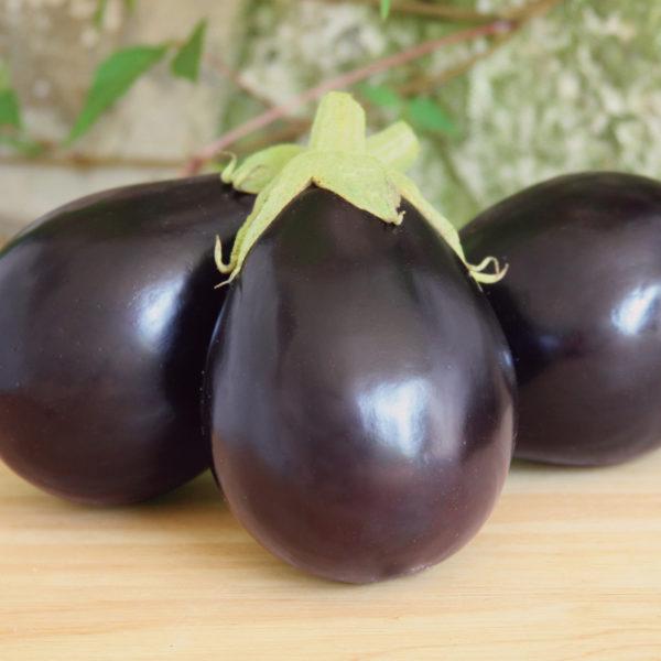 Eggplant Early Midnight Eggplant