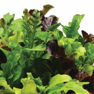 Lettuce Heatwave Blend Lettuce