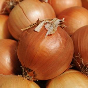 Onion Spanish Onion