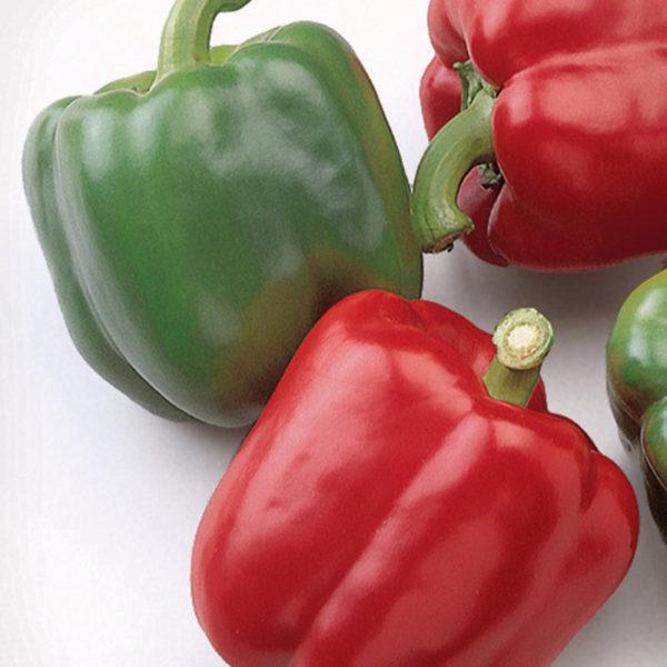 Pepper Baron Pepper