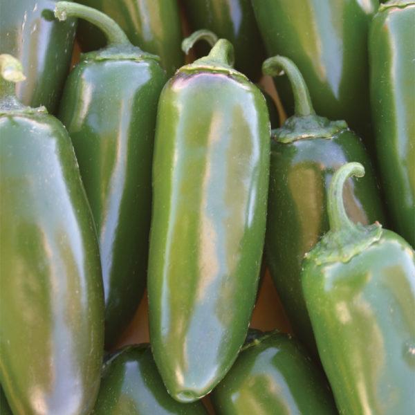 Pepper Jalapeno Gigante Pepper