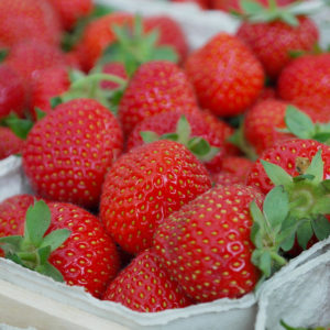 Strawberry Allstar Strawberry