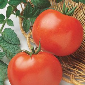 Tomato Rutgers Tomato