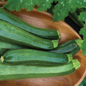 Zucchini - Squash