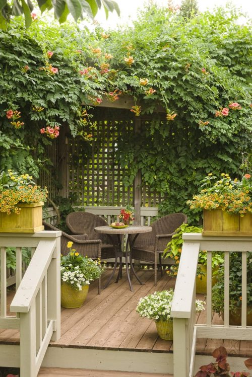 2 Small deck with vine covering_PW