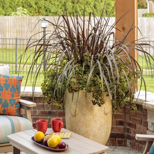 Blog 2-late summer grass pot_Proven Winners