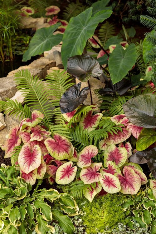 Bold foliage landscape planting_Proven Winners