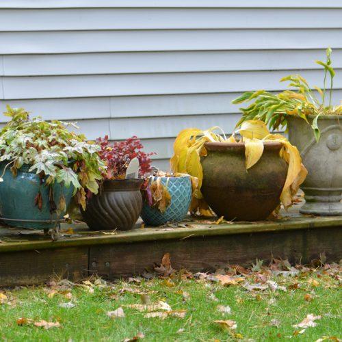 Fall perennials in pots_Susan Martin