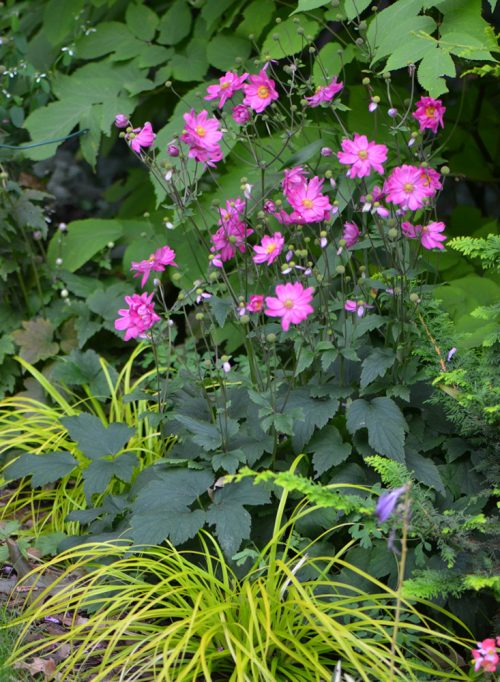 Perennial color contrast example_Susan Martin