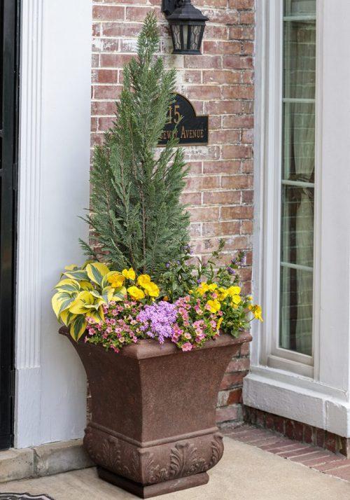 Spring porch pot closeup_Proven Winners