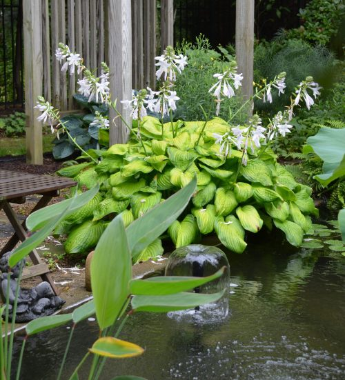 Water feature with hosta_Susan Martin (1)