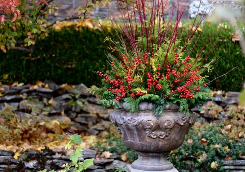 Winter arrangement from Garden Answer_Proven Winners