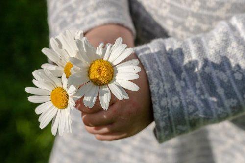 gifting cut flowers stock photo web