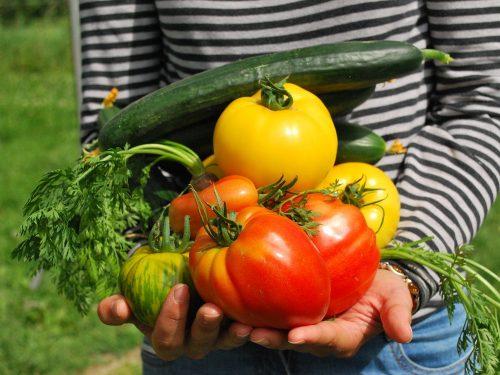 vegetable harvest stock photo